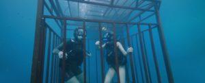 47 metri squalo