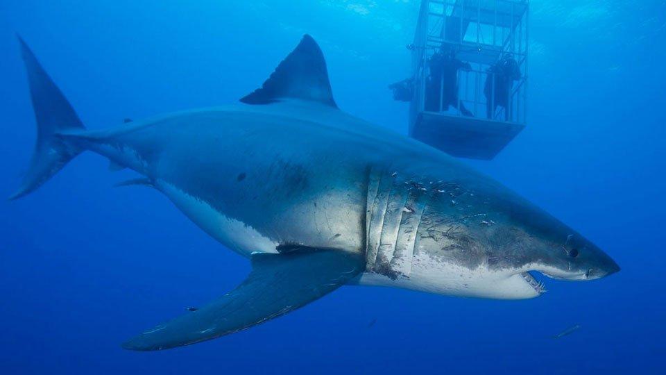 47 metri squali