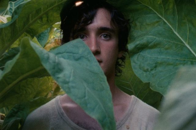 lazzaro felice streaming
