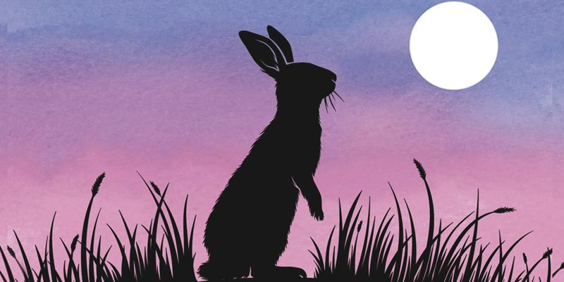 collina conigli