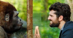 Attenti gorilla trama